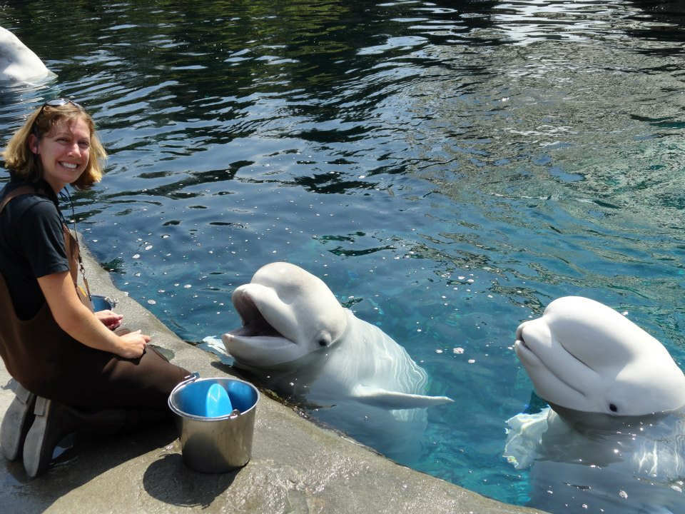 Kimberly Cummings with beluga whales